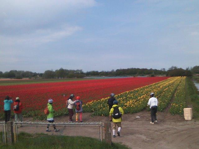 オランダの花畑