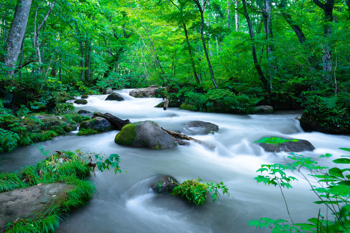 奥入瀬渓流 画像